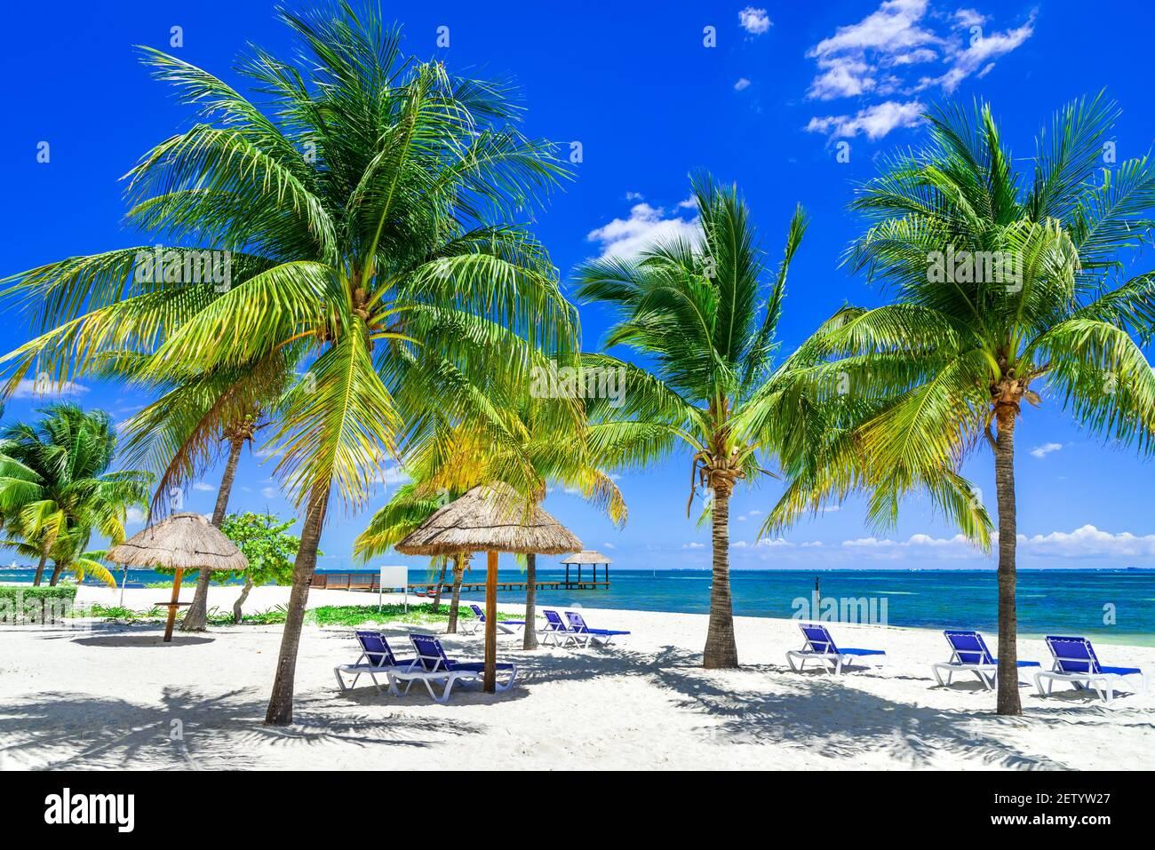 Paesaggio tropicale con palme da cocco sulla spiaggia dei caraibi, Cancun, Penisola dello Yucatan in Messico. Foto Stock