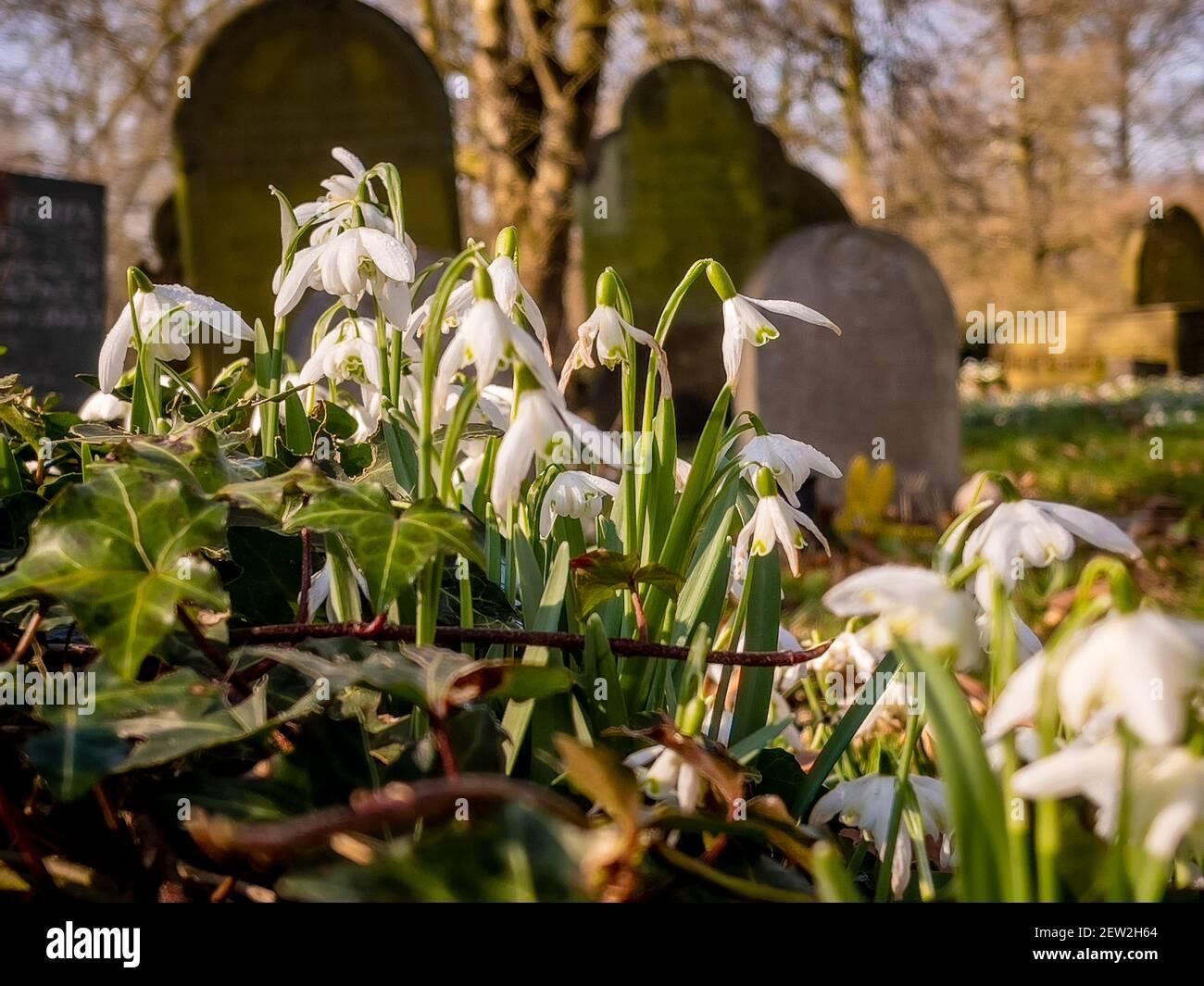 Nevicate nel cimitero Foto Stock