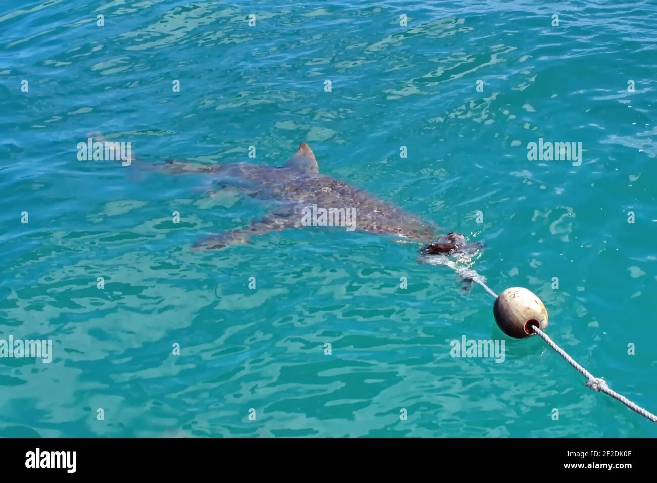 Deflettore dacqua a forma di delfino
