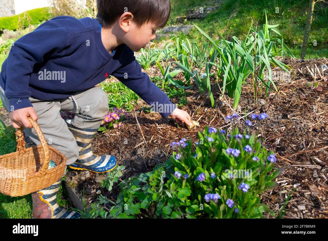 Bambino ragazzo 4 anni che tiene il cesto che raggiunge per Pasqua cioccolato Coniglio in giardino fiorito su caccia all'uovo Carmarthenshire Galles UK Gran Bretagna KATHY DEWITT Foto Stock