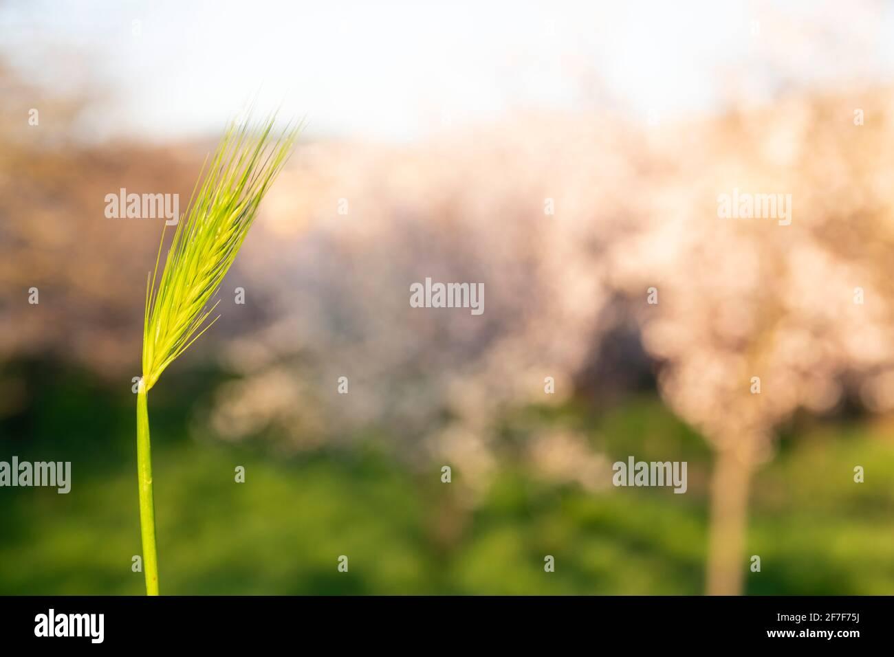 Concetto di primavera e crescita: Vista laterale e primo piano su erba verde in una giornata di sole. Fascio di sole che brilla attraverso le foglie. Crescita economica. Luce diurna. Foto Stock