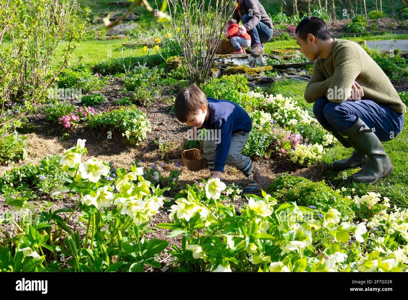 Bambino felice con il padre che guarda nel giardino del cottage del fiore di primavera Sulla famiglia caccia all'uovo di Pasqua che tiene il cesto di caccia per le uova GALLES REGNO UNITO KATHY DEWITT Foto Stock