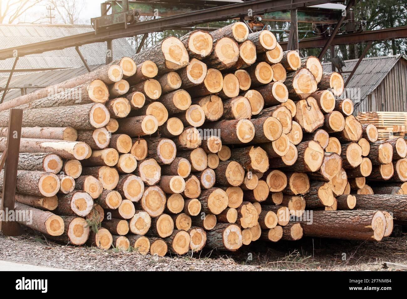 Fabbrica e industria. Stack di log. Produzione di legname, trasporto e consegna. Foto Stock