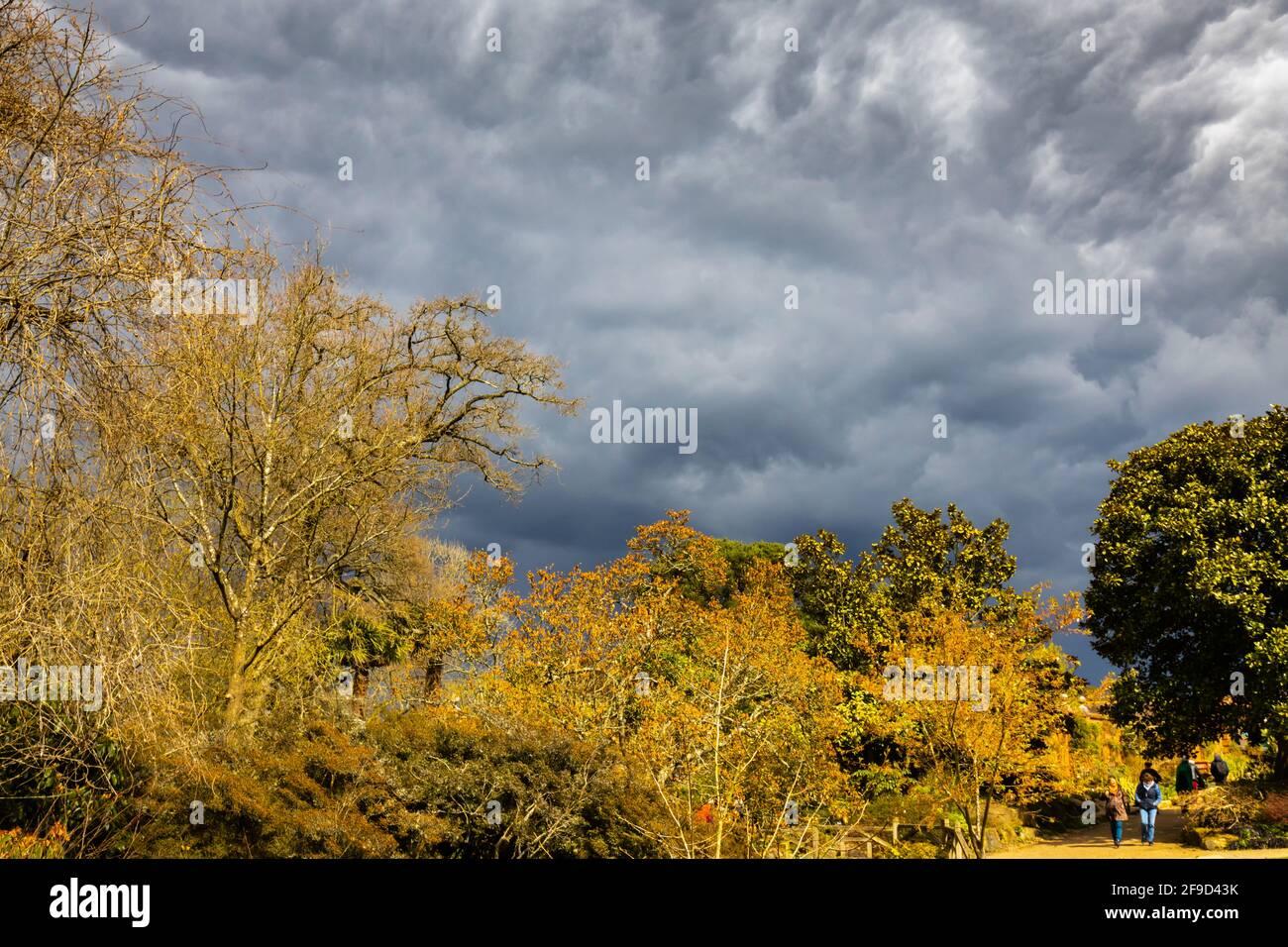 Cielo drammatico con nuvole di tempesta grigia sopra il gelo danneggiato magnolia alberi in RHS Garden, Wisley, Surrey, sud-est Inghilterra in primavera prima pioggia pesante Foto Stock