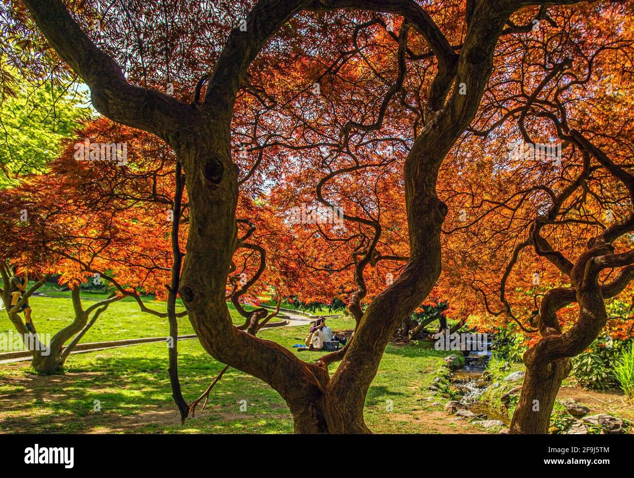 Italia Piemonte Torino Parco del Valentino - Giardino di roccia Foto Stock