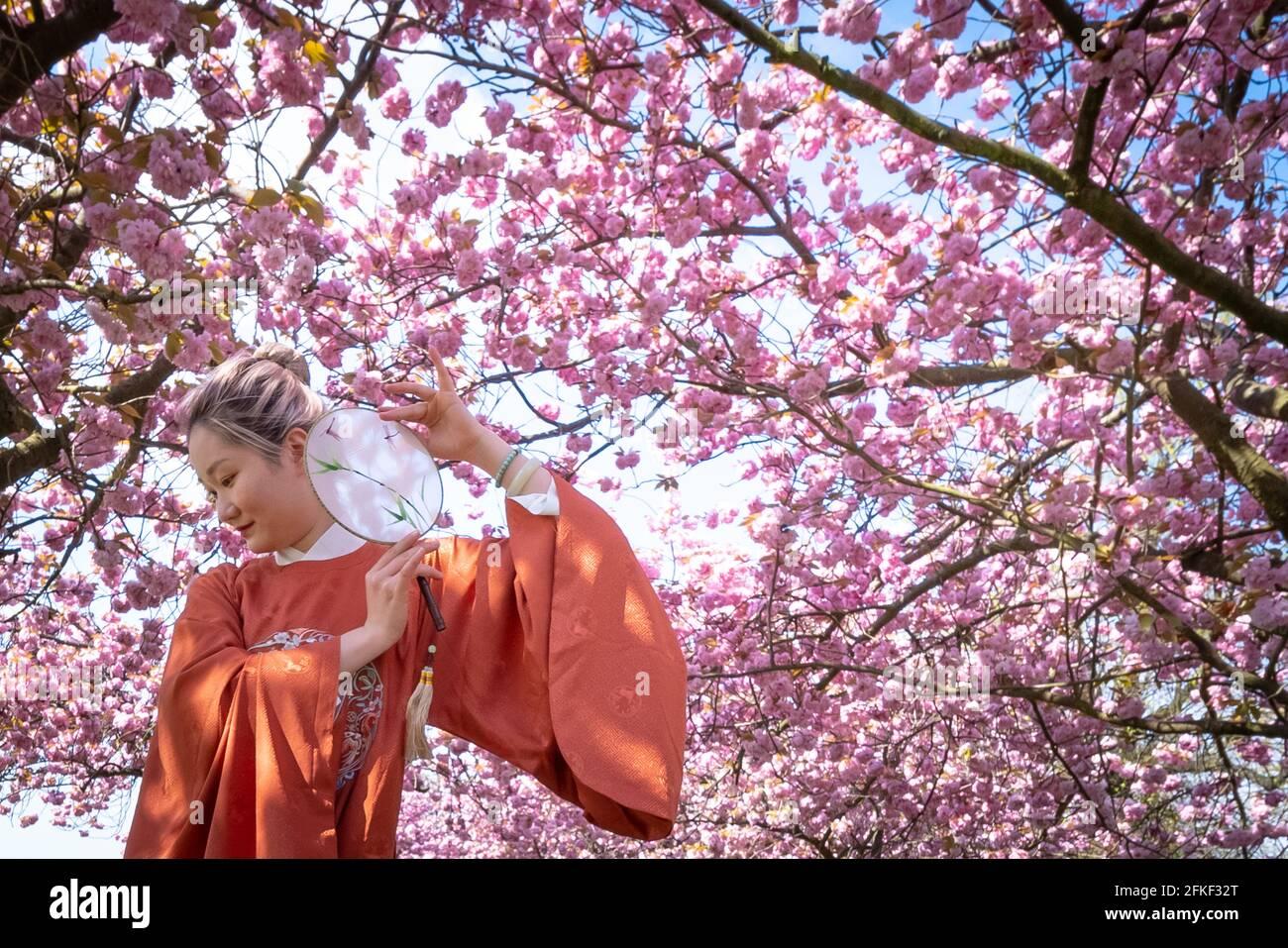 Londra, Regno Unito. 1 maggio 2021. Regno Unito Meteo: Il sole fiorisce nel Greenwich Park. Yuaner Xu, un maestro allievo di gridanza presso la London Contemporary Dance School (LCDS), gode del sole delle vacanze in riva al mare colpendo una posa vicino ai vivaci alberi di fiori di ciliegio nel Greenwich Park. Credit: Guy Corbishley/Alamy Live News Foto Stock