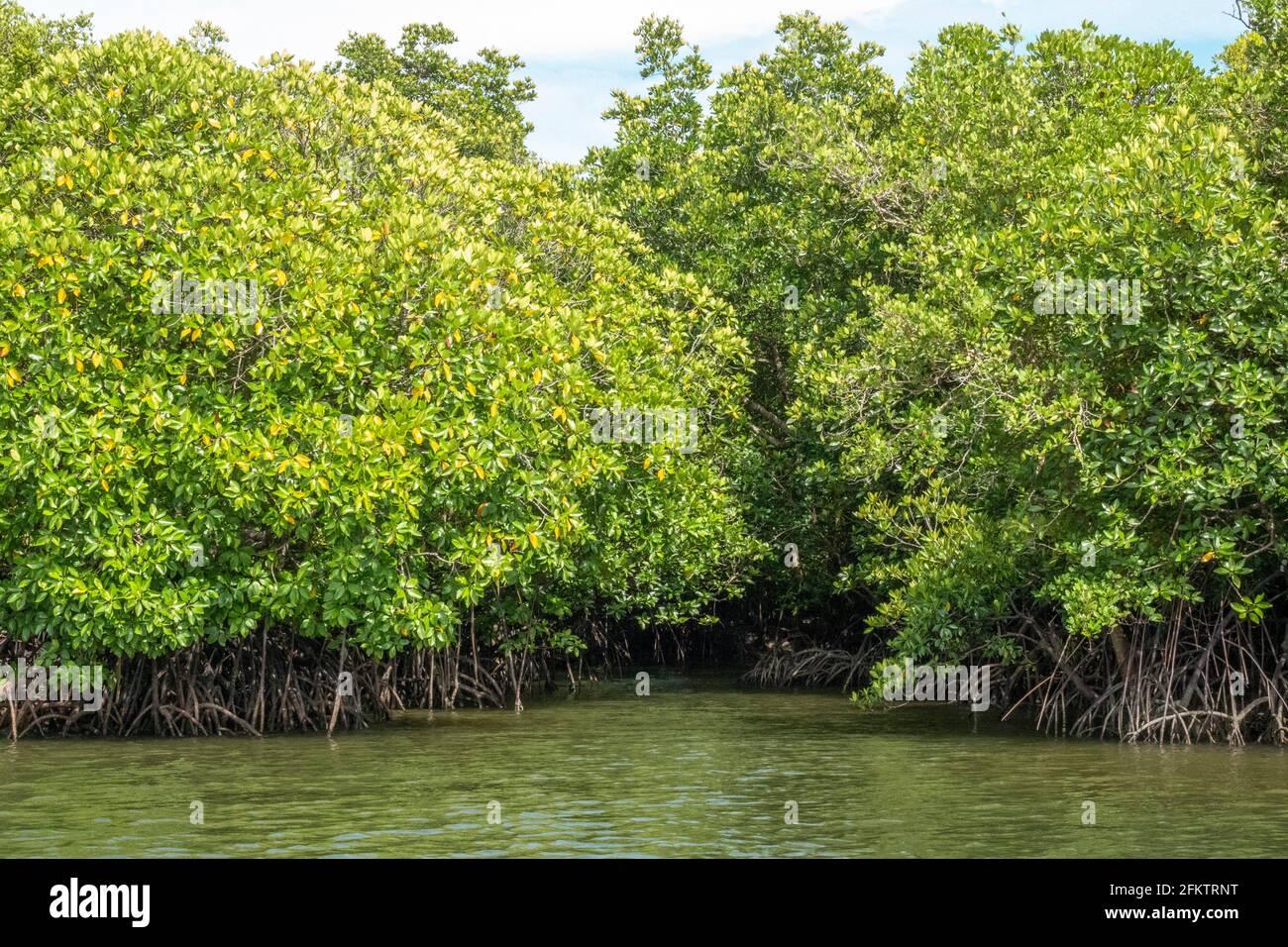 Navigando lungo Sibu Laut-Telaga Air River Bank, Matang, Sarawak, Malesia Foto Stock