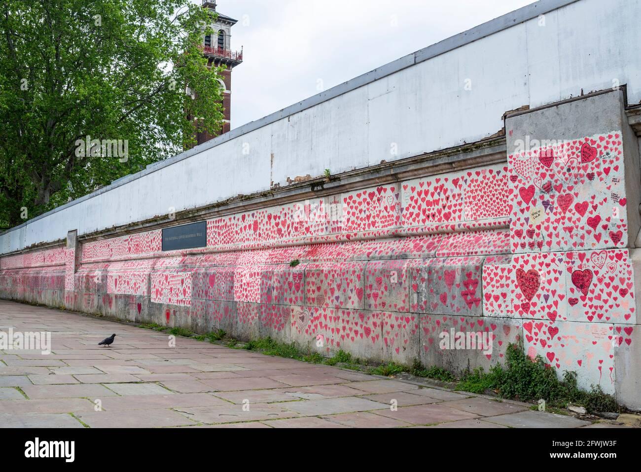 National Covid Memorial Wall in una giornata di lavoro a Lambeth, Londra, Regno Unito. Cuori rossi disegnati su un muro che rappresenta ogni morte di COVID 19. Uccello Foto Stock