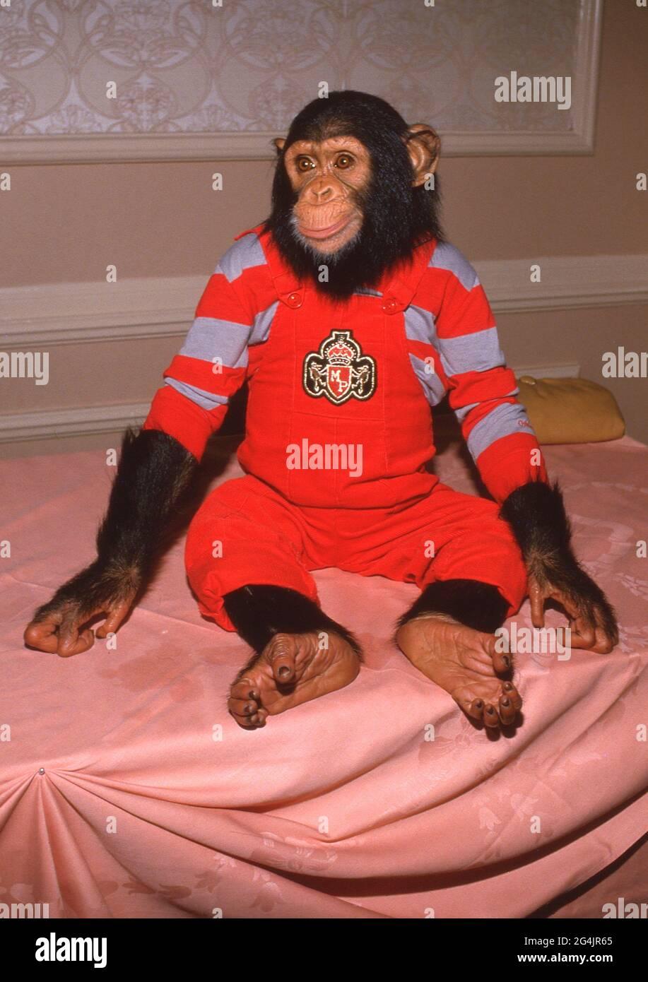 Bolle il Chimp Circa 1980's Credit: Ralph Dominguez/MediaPunch Foto Stock