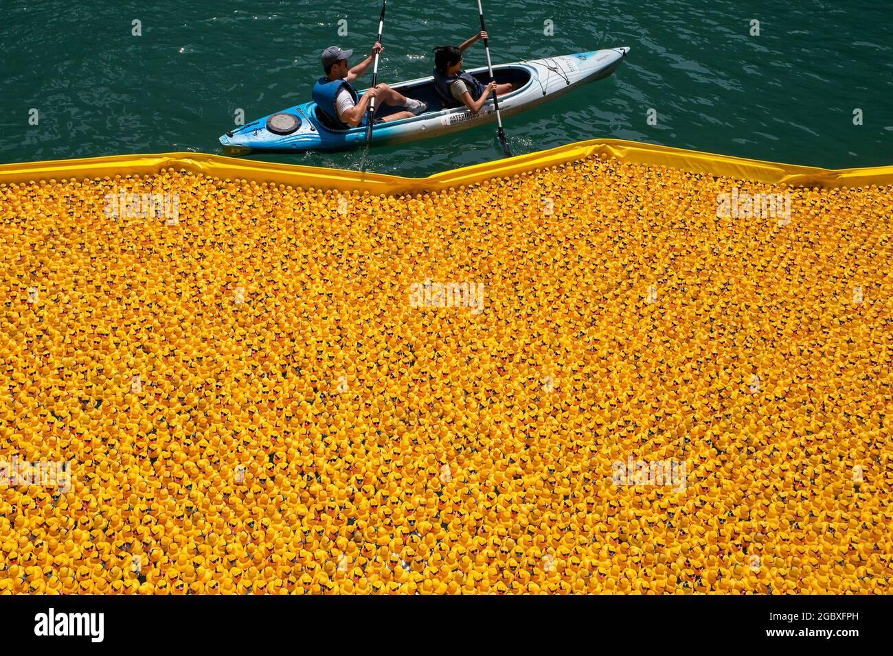 Chicago, Illinois, Stati Uniti. 5 agosto 2021. La gente pagaia in un kayak dalle anatre di gomma dopo essere stata versata nel fiume Chicago per il Chicago Ducky Derby, Giovedi. Oltre 70,000 anatre di gomma sono corse lungo il fiume Chicago come una raccolta di fondi annuale che avvantaggerà le Olimpiadi speciali dell'Illinois. (Credit Image: © Ringo Chiu/ZUMA Press Wire) Foto Stock