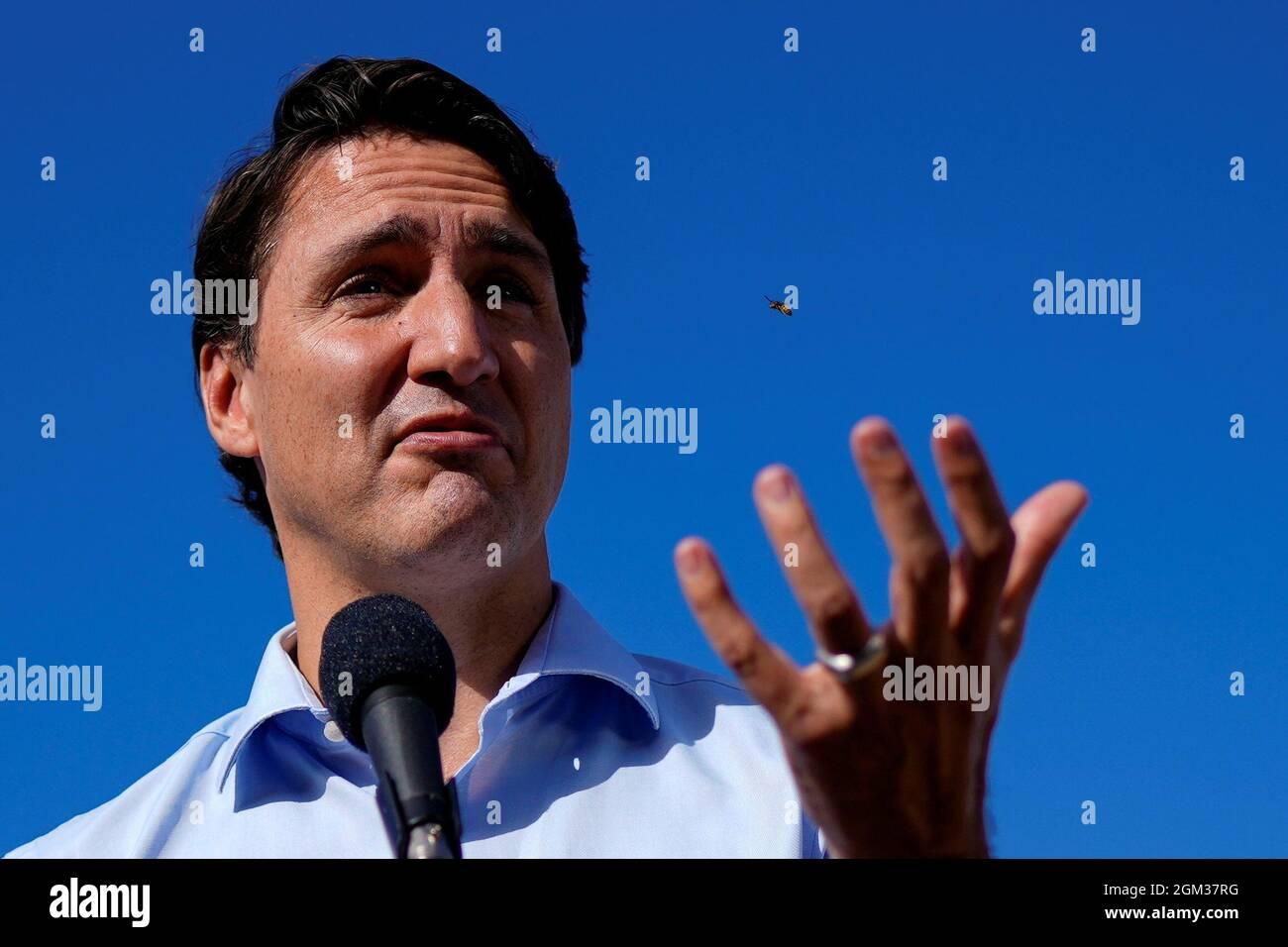 Un'ape vola vicino al primo ministro liberale del Canada Justin Trudeau durante una sosta della campagna elettorale a Montreal, Quebec, Canada 16 settembre 2021. REUTERS/Carlos Osorio Foto Stock