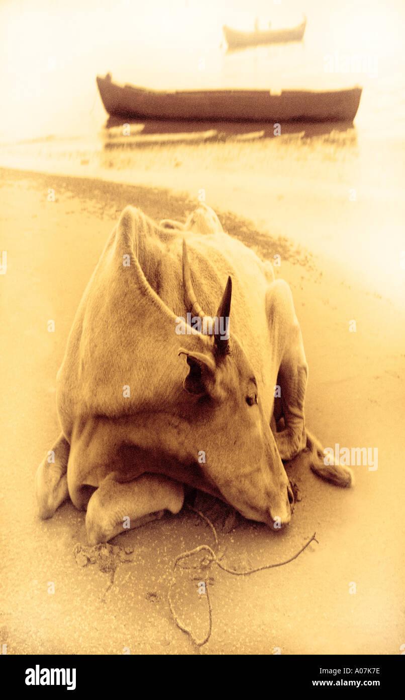 Orizzontale, a piena lunghezza e all'aperto, 30-34 anni, 35-39 anni, vista frontale e vista laterale, Subcontinente indiano etnicità, animale, vento Immagini Stock