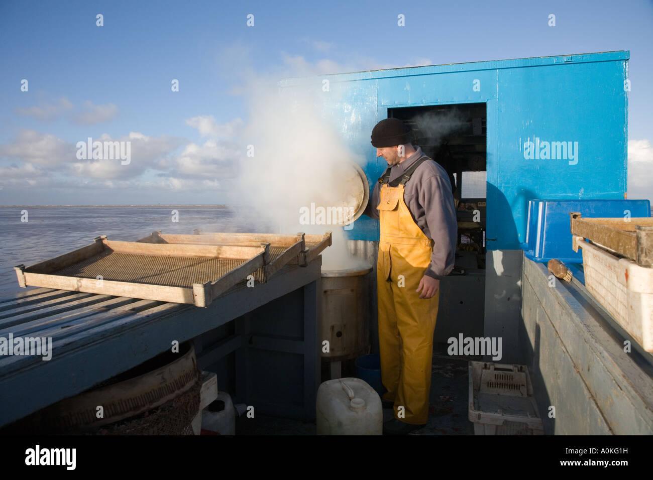 Pesce Commerciale crostacei Pesca dei gamberetti con modificati veicolo trattore, Southport Merseyside Regno Unito Immagini Stock