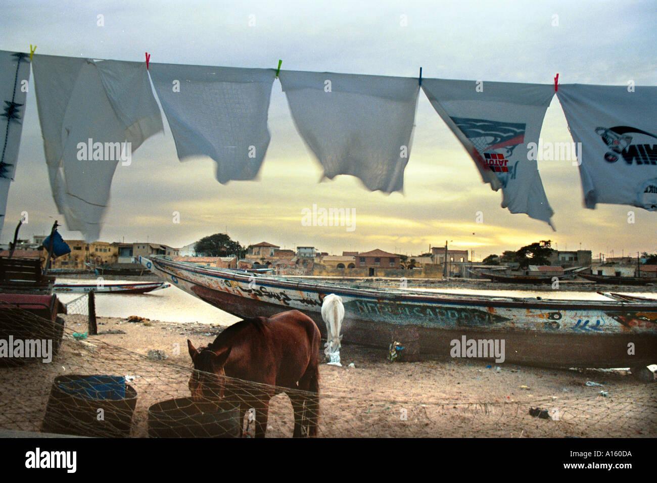 Commercianti senegalesi alimentano i loro cavalli a sunrise prima che i pescatori locali hanno portato nei giorni raccolto nella città di San Immagini Stock