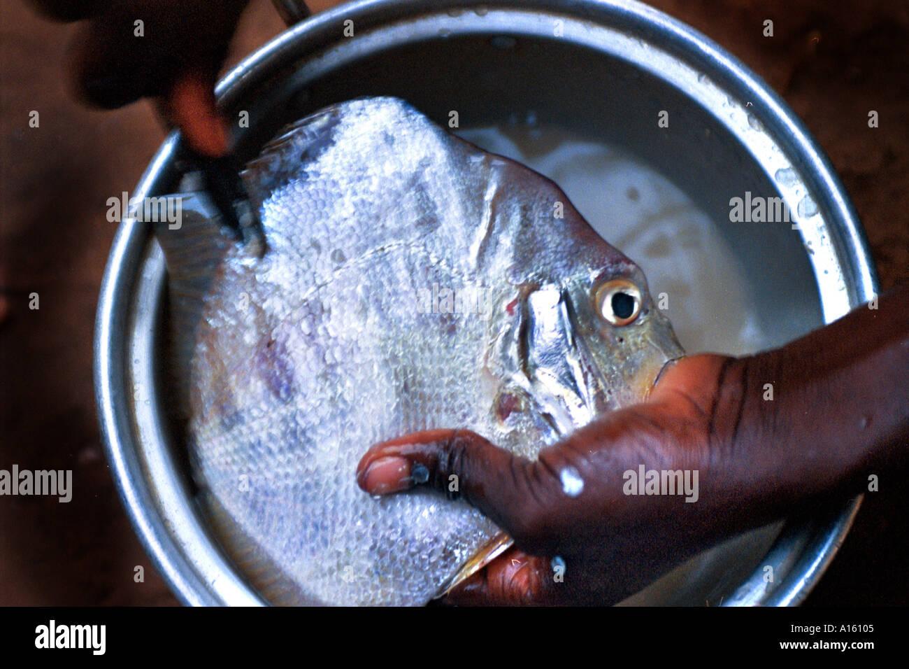 I pesci provenienti dalla costa atlantica off West Africa è preparato da un mauritano vicino alla regione della Valle che confina con il Senegal. Immagini Stock