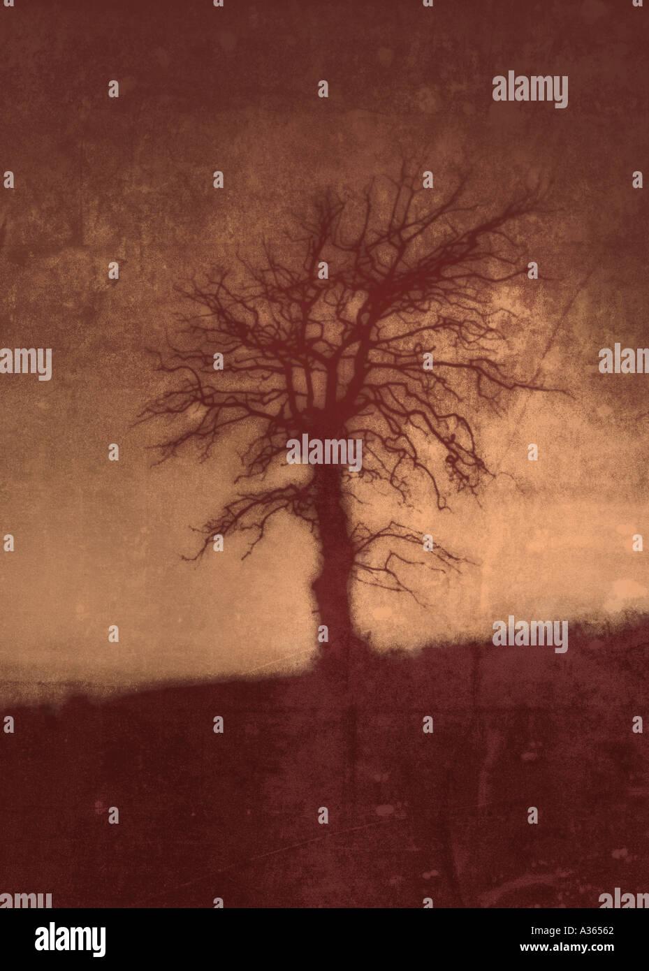 albero rosso Immagini Stock