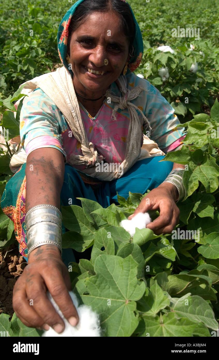 Agricoltore Guajarat in India cresce il cotone che lei vende sotto il regime di commercio equosolidale a Marks & Spencer Immagini Stock