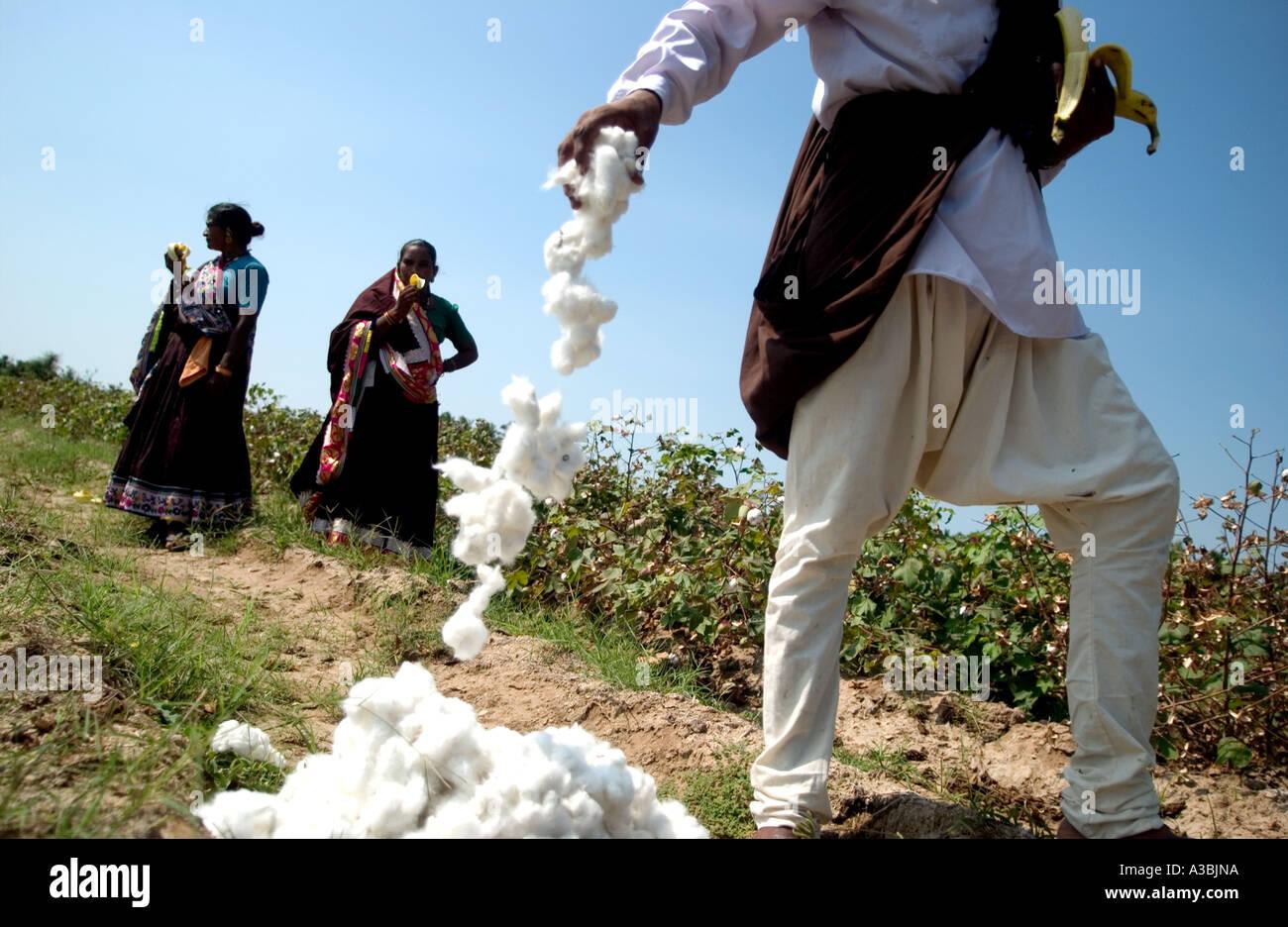 Gli agricoltori su un campo di cotone. Il cotone è venduto come cotone Fairtrade a Marks & Spencer Immagini Stock