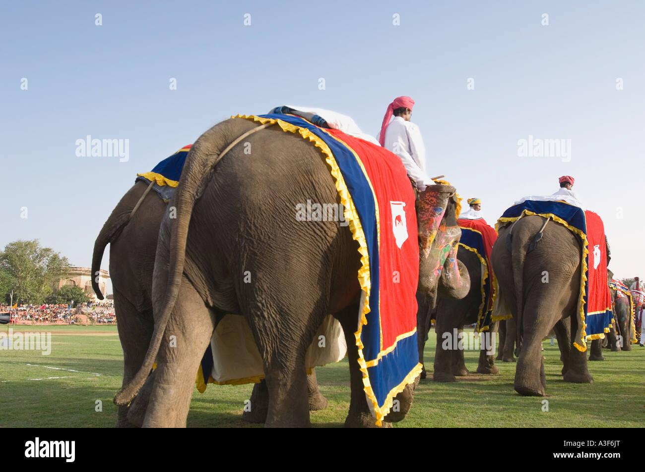 Vista posteriore di tre uomini a cavallo elefanti a un festival di elefante, Jaipur, Rajasthan, India Foto Stock