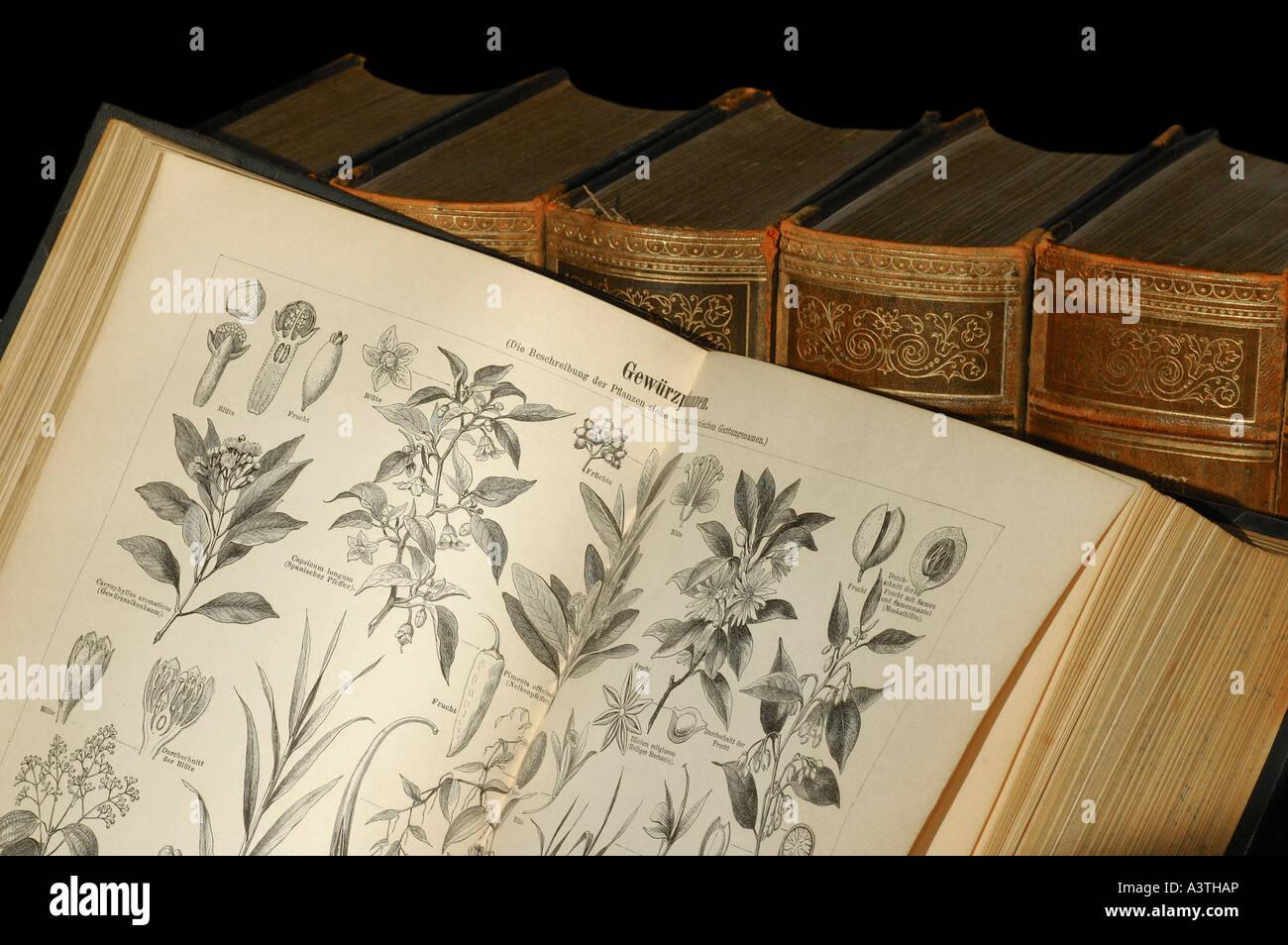 Illustrazioni di piante aromatiche in una vecchia enciclopedia Immagini Stock