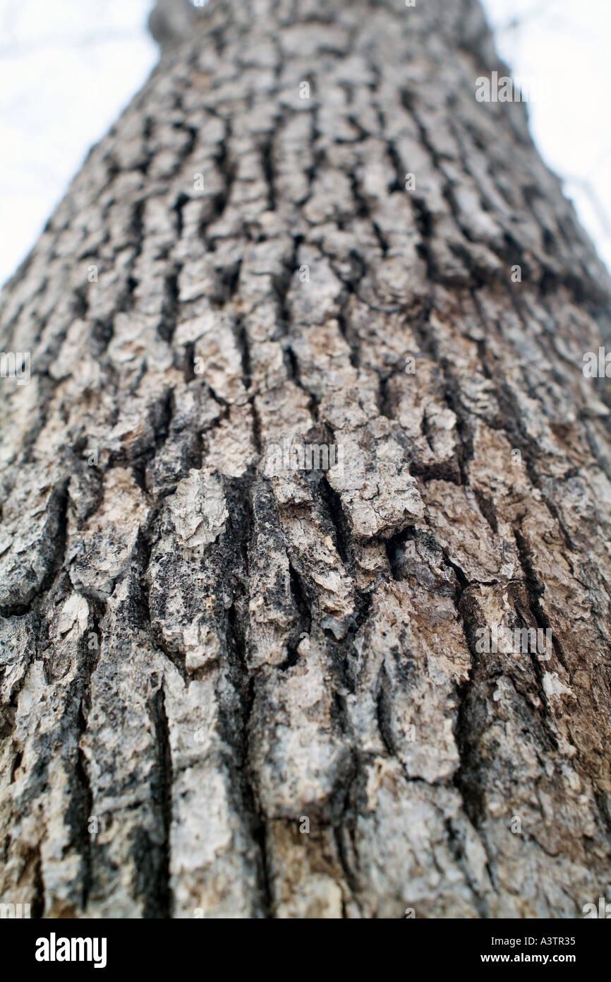 Corteccia di albero Pattern Immagini Stock