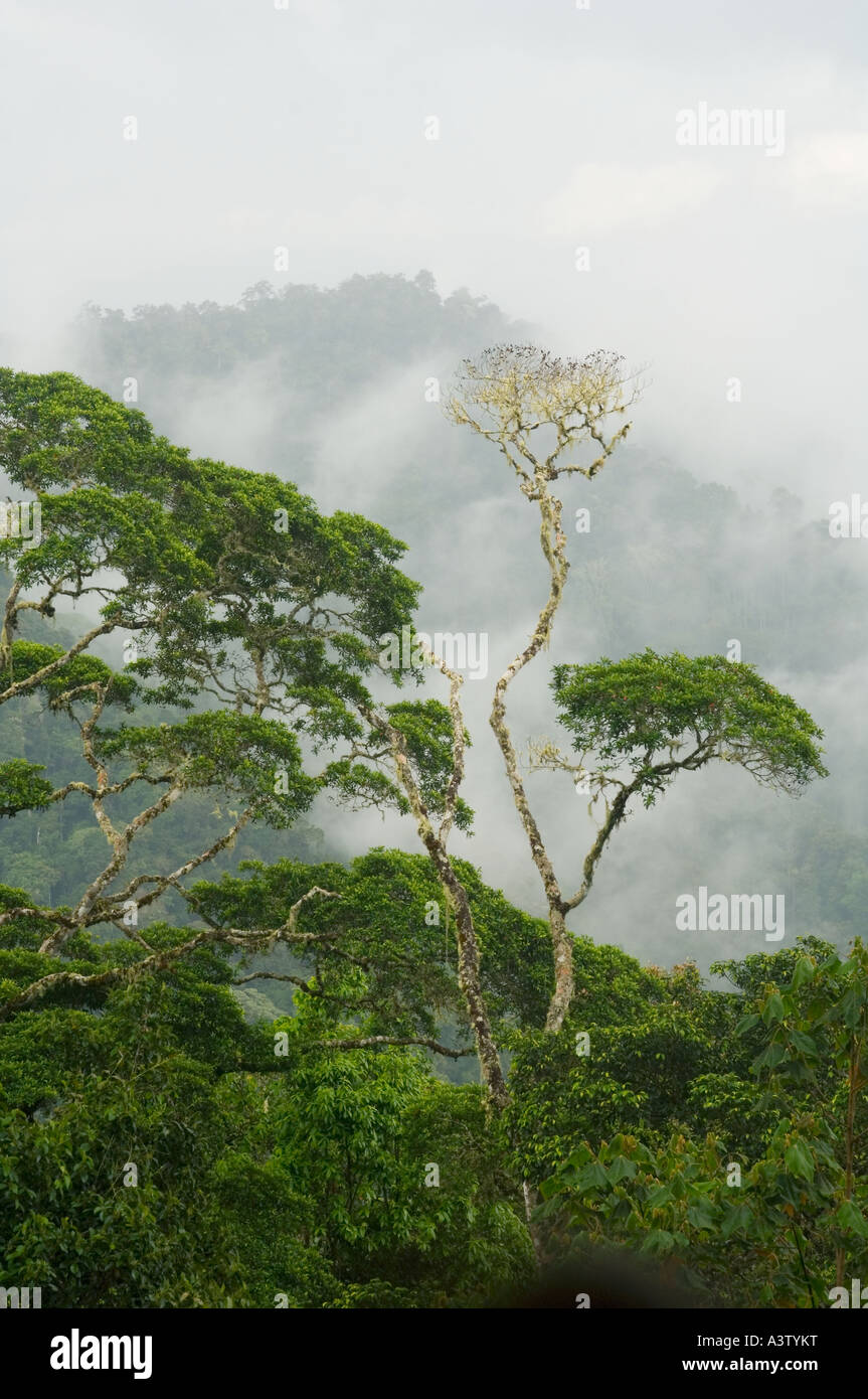 Panama, Parco Nazionale del Darién, vista di Darien deserto da Pirre Mountain, ca 5000 piedi Immagini Stock
