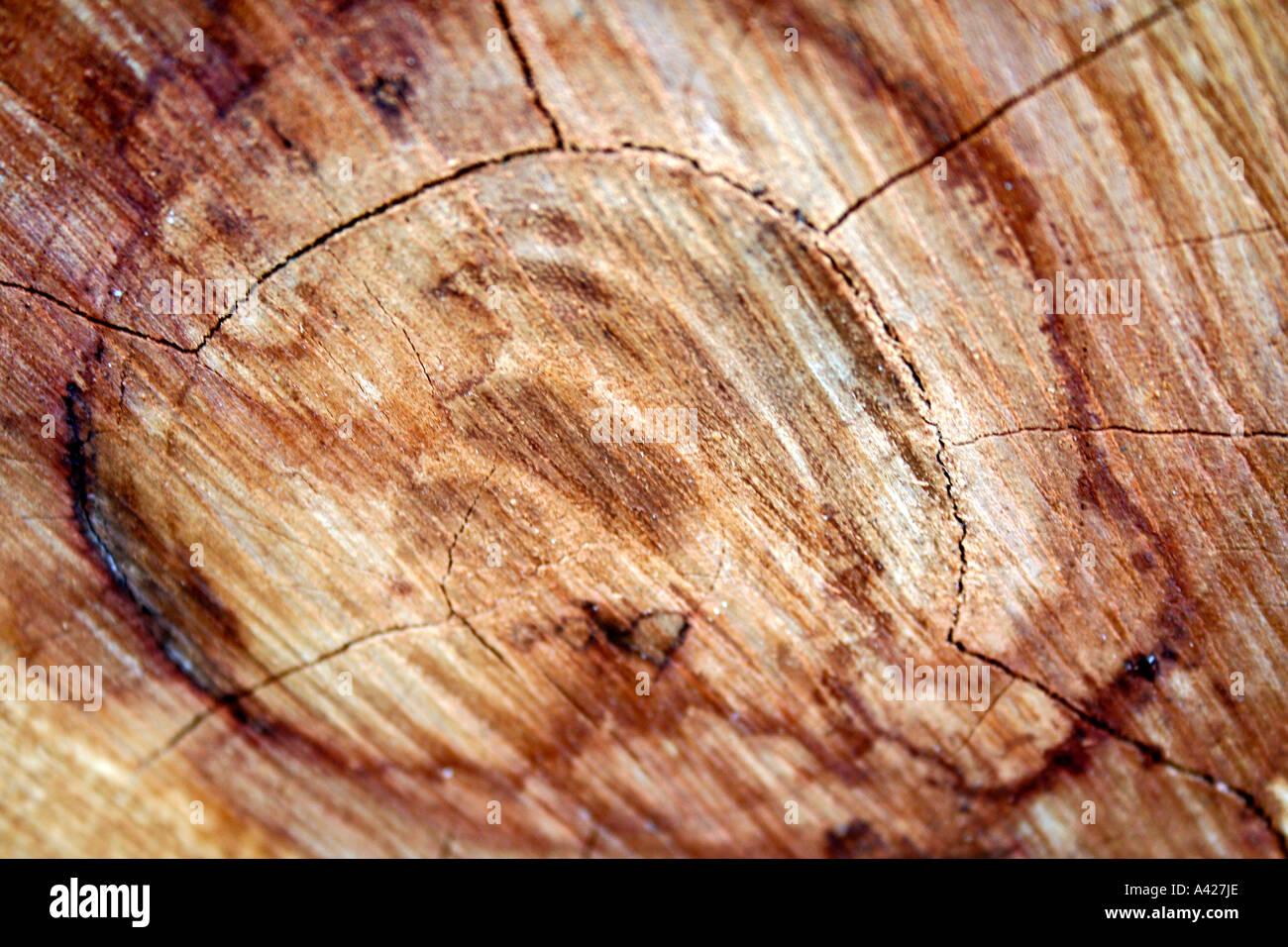 albero anelli di carbonio datazione Kasia Smutniak incontri