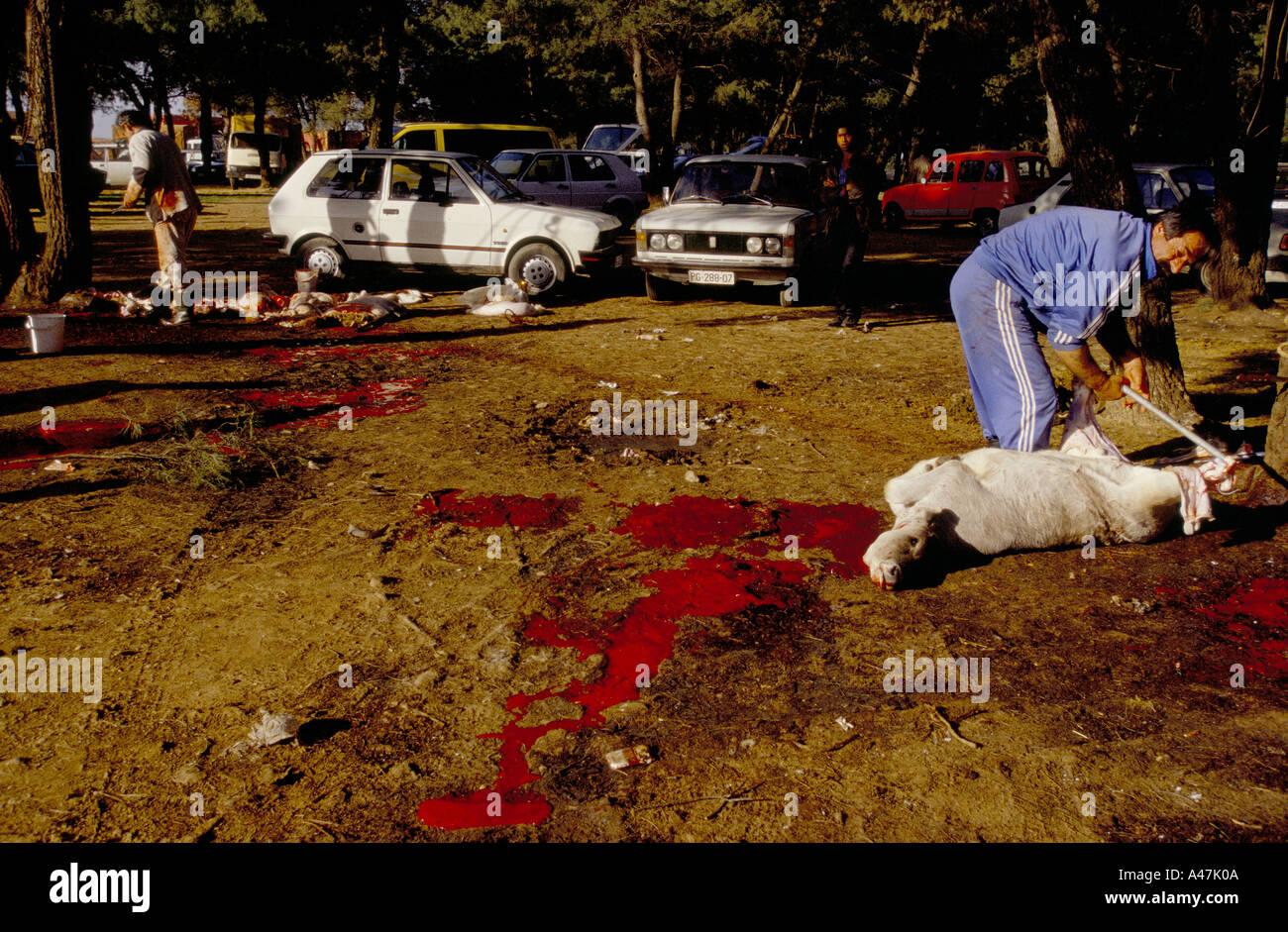 La Credenza Podgorica : Slaughtering animals immagini fotos stock