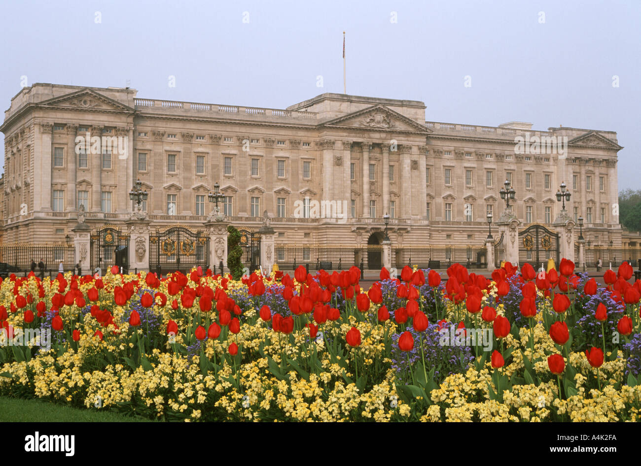 Buckingham Palace e tulipani in primo piano Londra Inghilterra Regno Unito Foto Stock