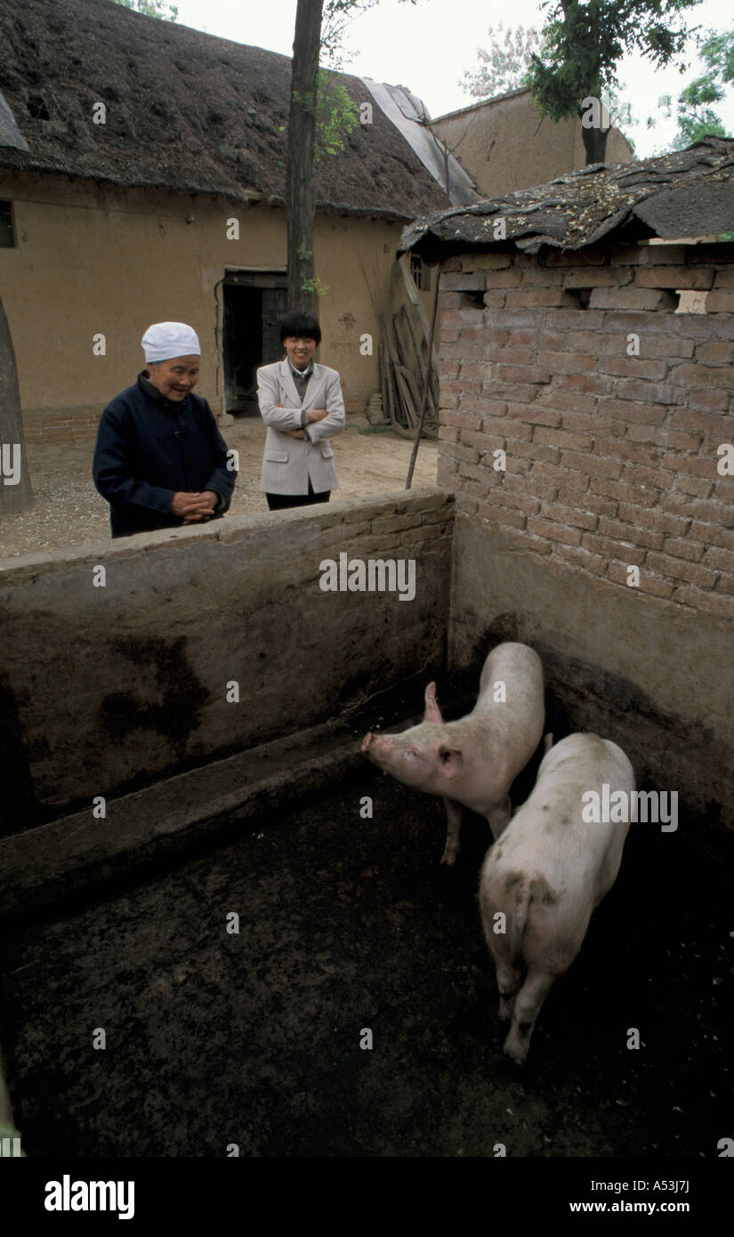 Painet ha1032 7087 suini cinese chen gui ying figlia villaggio xinghe shanxi xian paese nazione in via di sviluppo Immagini Stock