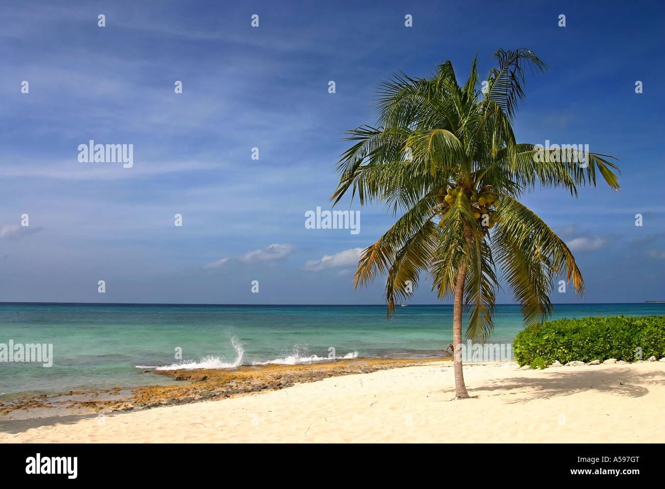 Palm tree su sette miglia di spiaggia Immagini Stock