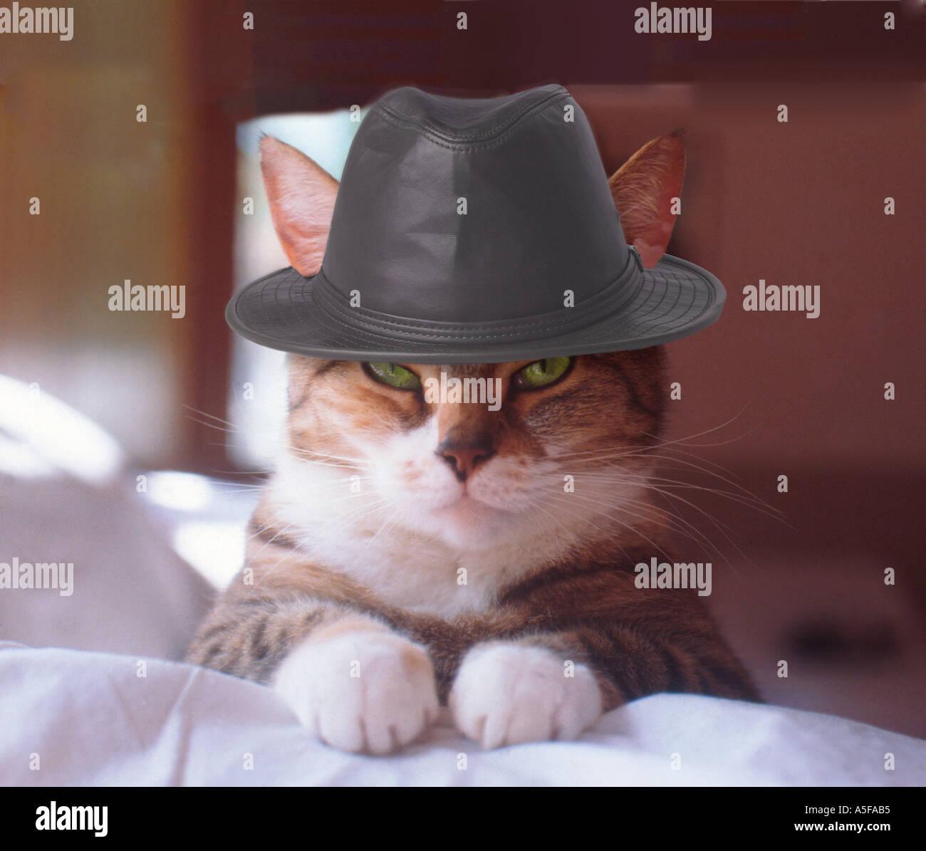Il Gatto Con Un Cappello Foto Immagine Stock 391861 Alamy