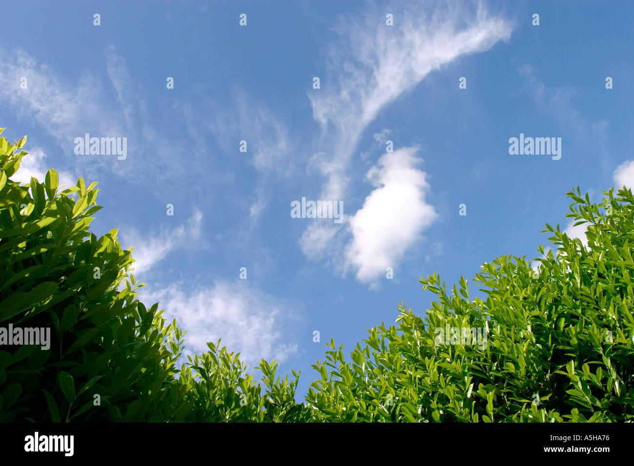 Luminose Blu Cielo Estate Incorniciata Da Una Siepe Di Alloro