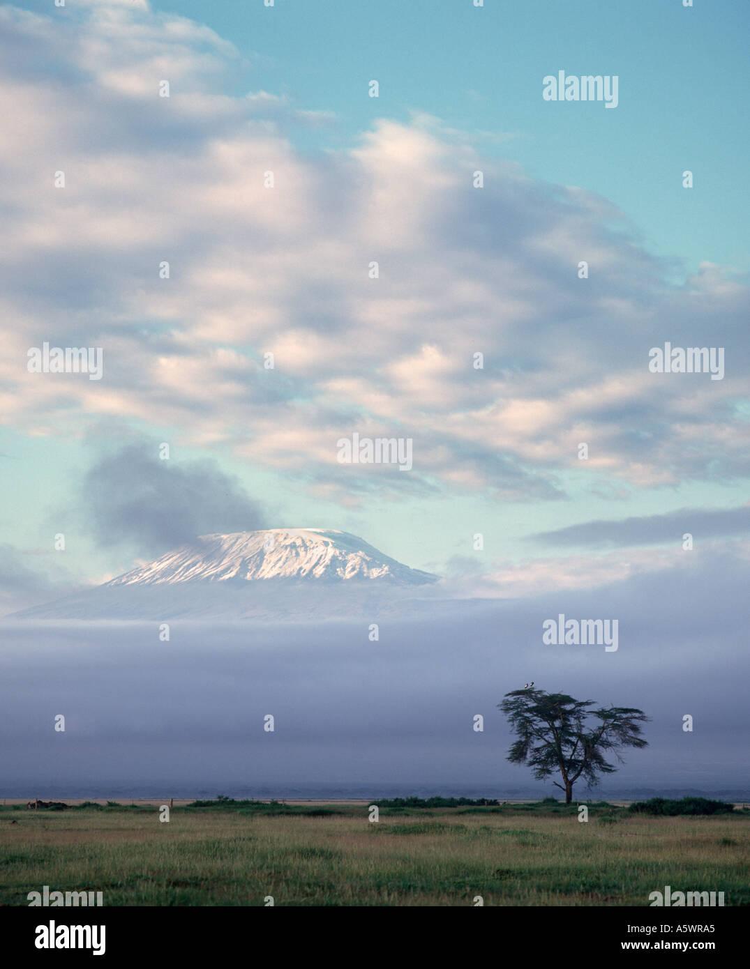 La Snow capped picco del Monte Kilimanjaro all'alba da Amboseli Lodge, Amboseli National Park, Kenya, Africa orientale Immagini Stock