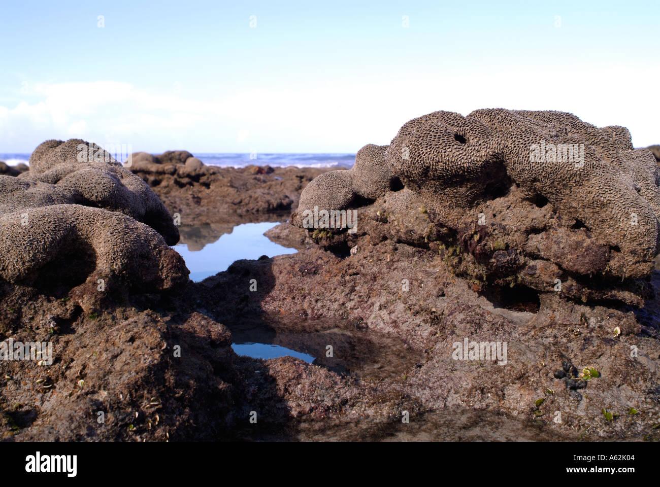 Vasca Da Bagno Bassa : Wormrock reef esposto a bassa marea off vasca da bagno beach martin