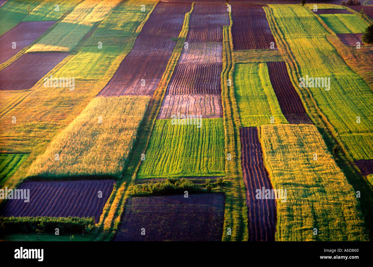 Azienda agricola biologica a sud-est della Polonia Foto Stock