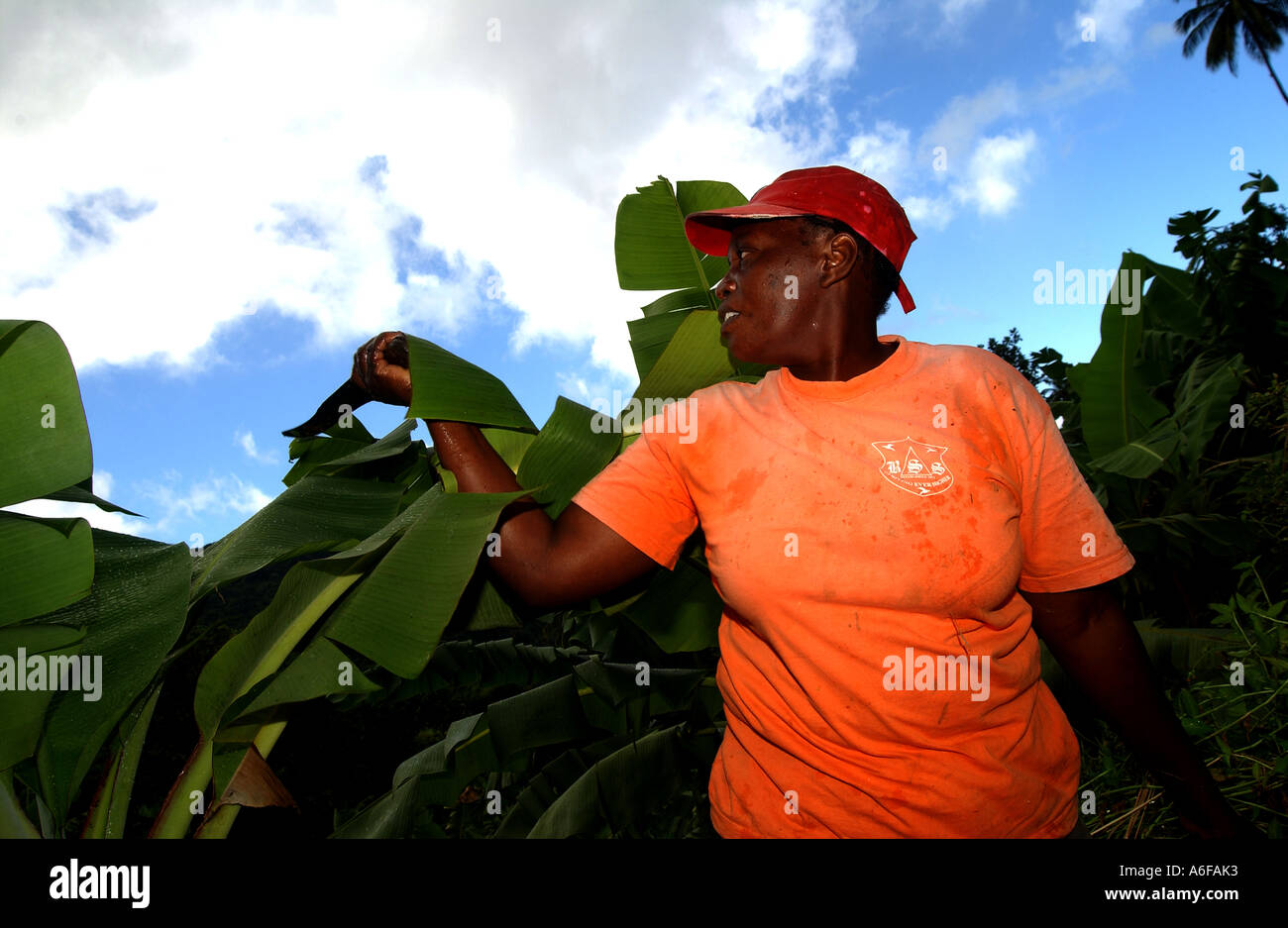 Jocelyn tromba, Fairtrade agricoltore Immagini Stock