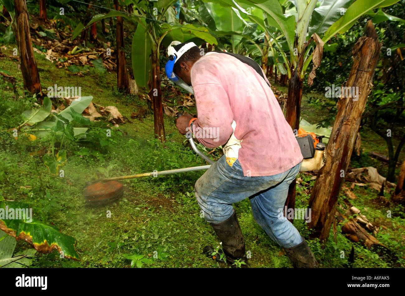 Fairtrade agricoltore erbacce di fresatura Immagini Stock