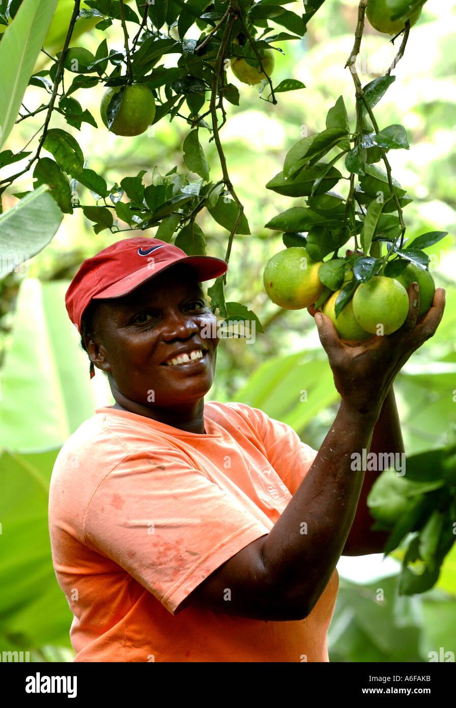 Fairtrade banana agricoltore, Jocelyn tromba, cresce arance come coltura alternativa per le banane Immagini Stock