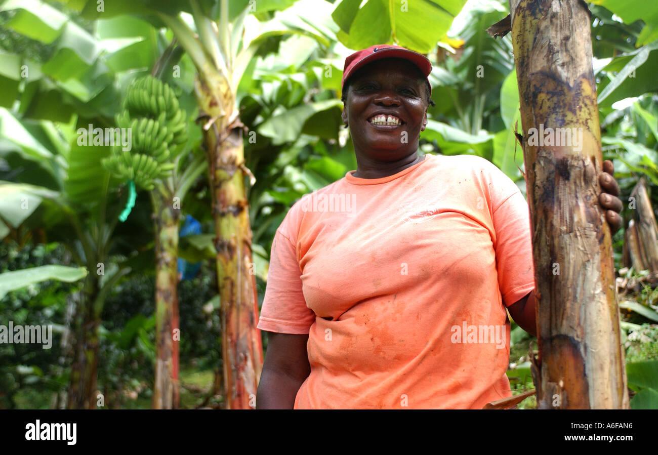 Fairtrade agricoltore nella sua piantagione di banane in St Vincent, dei Caraibi Immagini Stock