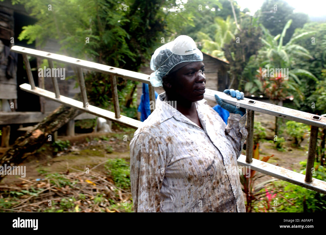 Fairtrade agricoltore, Maria Porter banane di prelievo Immagini Stock