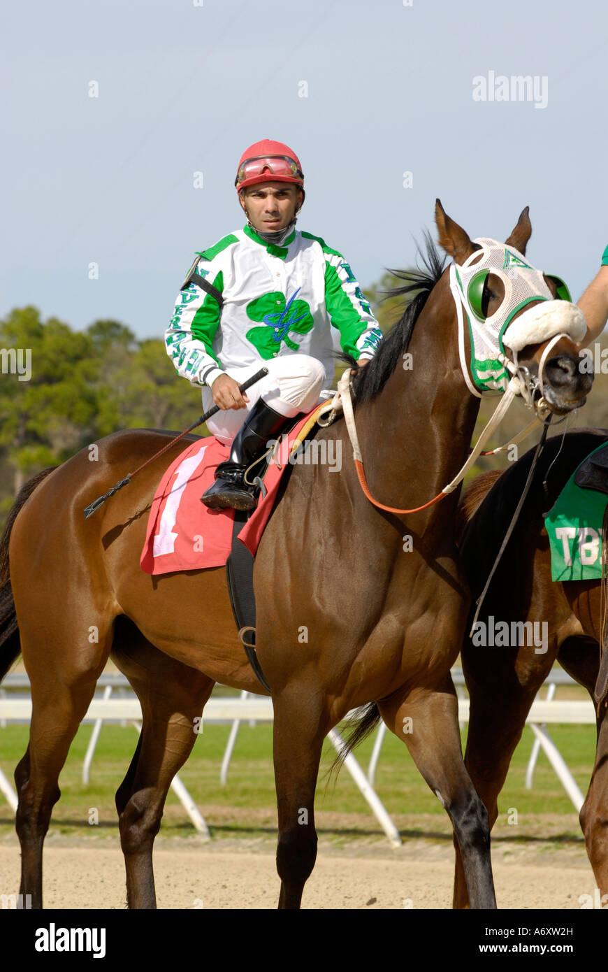 Corse di cavalli purosangue Tampa Bay Downs Florida FL Tampa Immagini Stock
