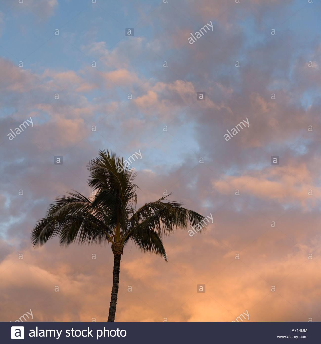 Cumulus nuvole e Palm tree in sera sull'isola di Maui nello stato delle Hawaii USA Immagini Stock