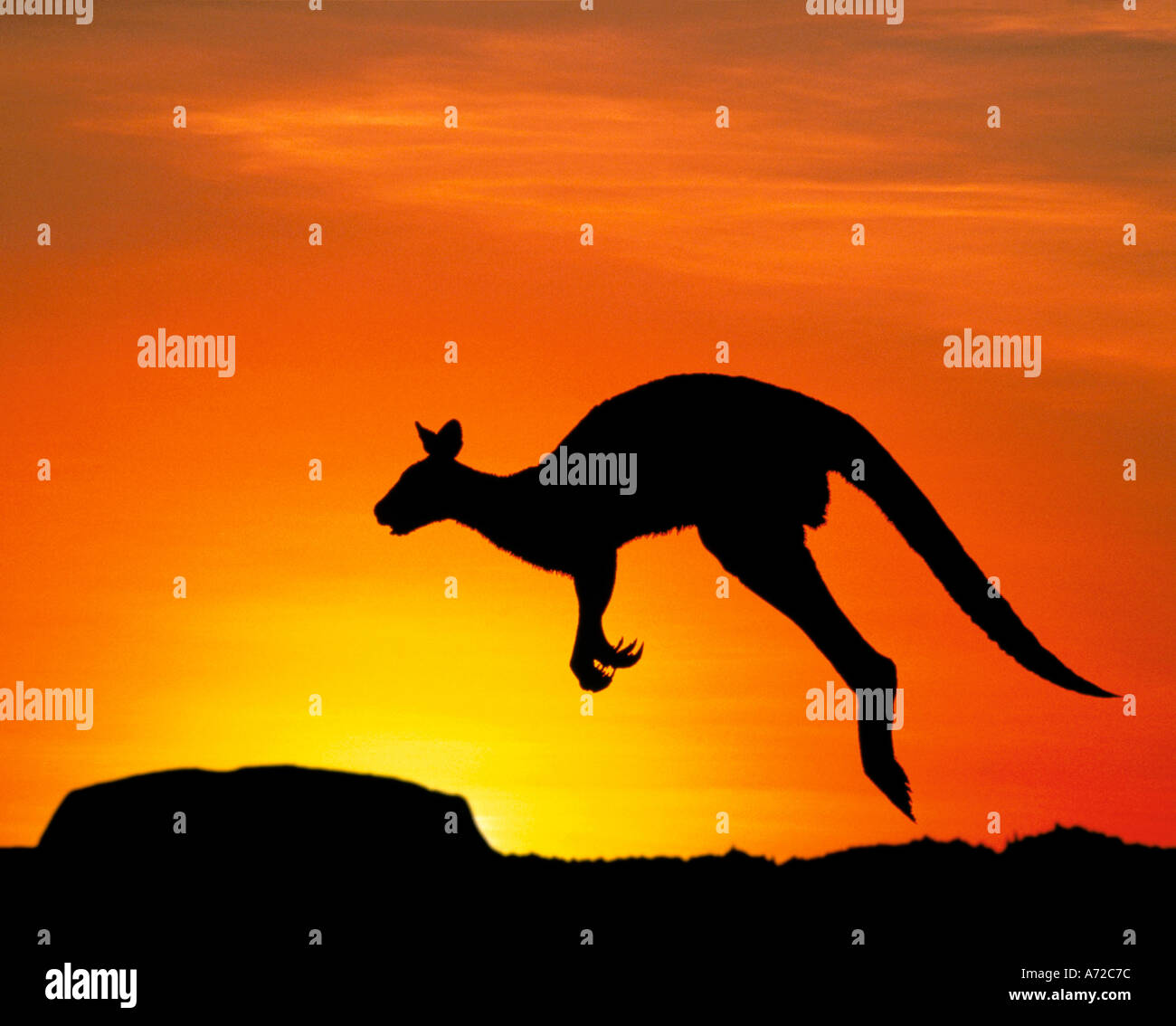 Silhouette di Uluru Ayers Rock e Kangaroo Territorio del Nord Australia Immagini Stock