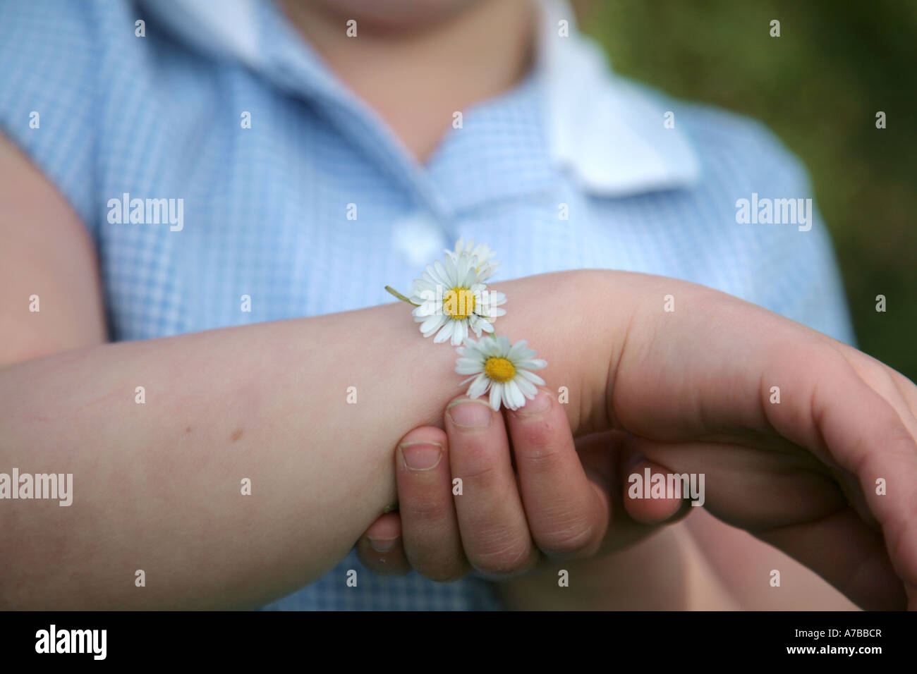 Daisy chain Foto Stock