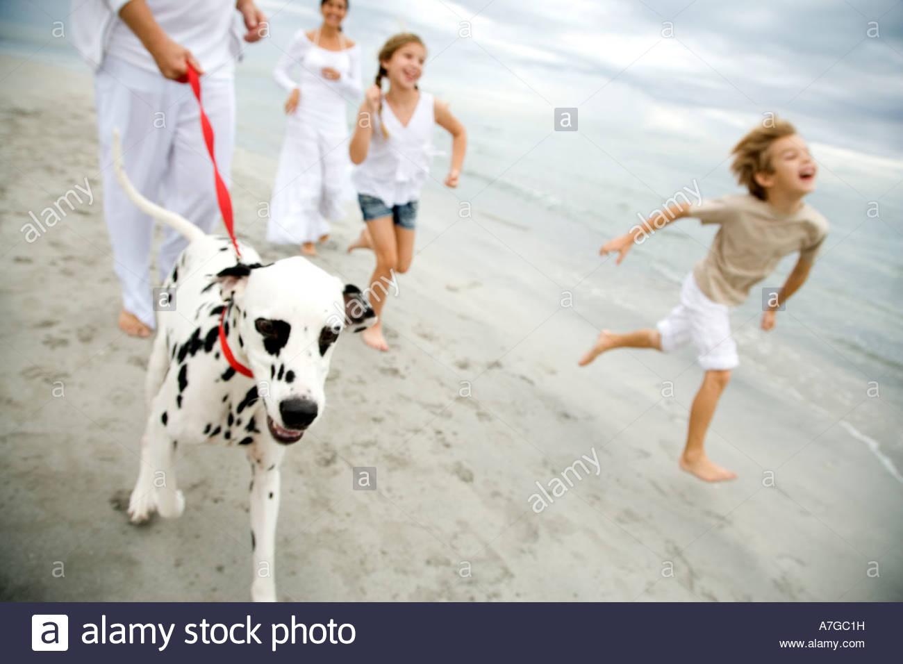 Una famiglia passeggiate con il cane su una spiaggia Immagini Stock