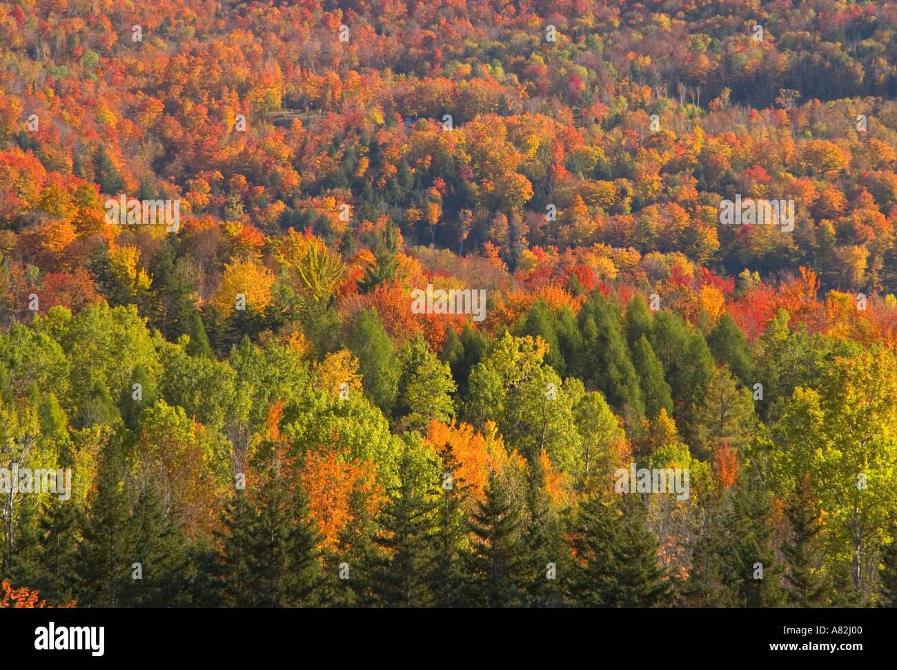 In autunno gli alberi, Vermont, New England, STATI UNITI D'AMERICA Immagini Stock
