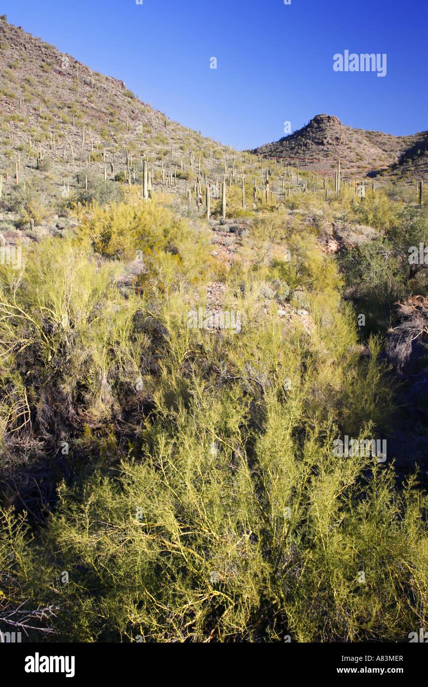 Cave Creek Area ricreativa vicino a Phoenix in Arizona Immagini Stock