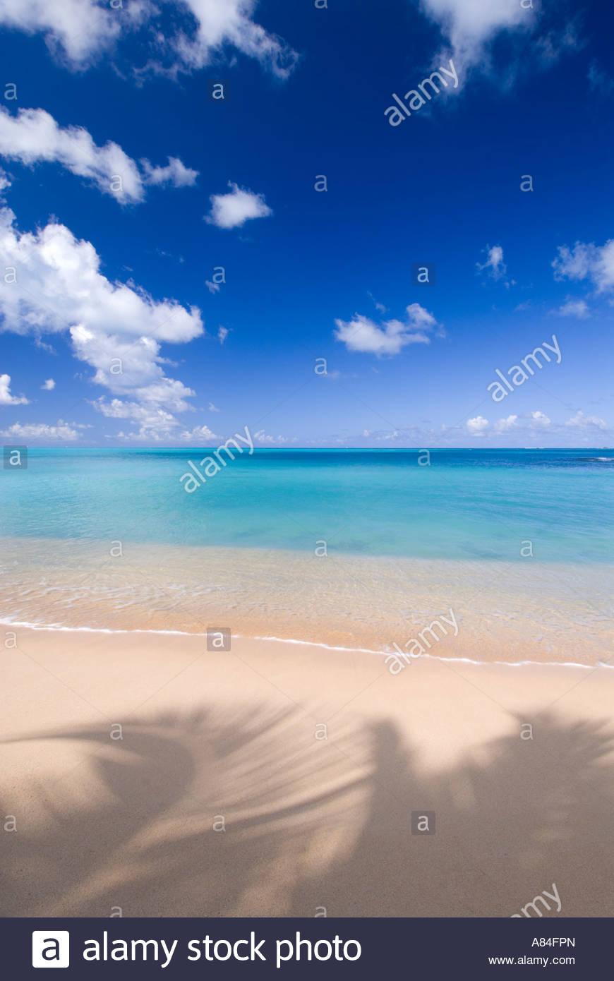 Un albero di palme che proietta la sua ombra sulla sabbia a Hawksbill Beach, Antigua, Isole Sottovento, dei Caraibi Immagini Stock