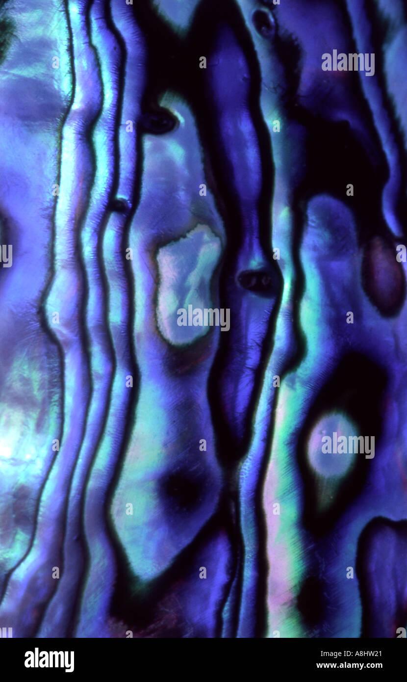 Abstract dettaglio Paua Abalone bossolo lucidati Nuova Zelanda Immagini Stock